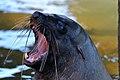Seal (23758914794).jpg