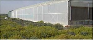 Seawater greenhouse - Figure 4. Two years into operation from the back of the greenhouse