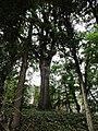 Senigallia LeGrazie Cerro 1.jpg