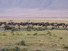 Serengeti National Park-108463.jpg