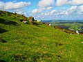 Sheep, Slieve Gullion - geograph.org.uk - 564006.jpg