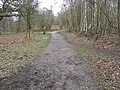 Sherwood Forest - Five Footpaths Meet - geograph.org.uk - 730058.jpg