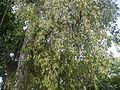 Shitanshu (Hindi- शीतांशु) (4591128987).jpg