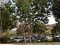 Simi Valley, CA, USA - panoramio (68).jpg
