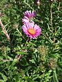 Simplicius 006 Flower.jpg