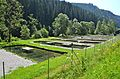 Sirnitz Neualbeck 10 Fischereibetrieb Payr 16072013 322.jpg
