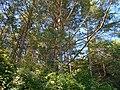 Smilyans'kyi district, Cherkas'ka oblast, Ukraine - panoramio (97).jpg