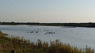 Snettisham RSPB reserve - Image: Snettisham ducks
