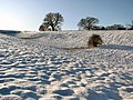 Snow-covered meadow - geograph.org.uk - 1626629.jpg