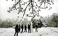 Snowy day of Tehran - 7 March 2013 17.jpg