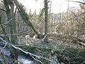 Solingen Hackhausen 0015.jpg