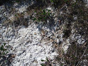 Solonchak - Solonchak ground