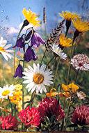 Sommerblumen01