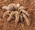 Spider31.jpg