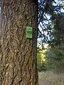Spokane, WA, USA - panoramio (25).jpg