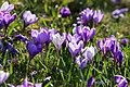 Spring Is In The Air At Last (146357809).jpeg