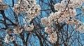 Spring at Eisenhower Park (39849024020).jpg