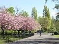 Spring in Sefton Park - geograph.org.uk - 164962.jpg