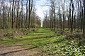 Spring in Temple Wood near Aslackby - geograph.org.uk - 407491.jpg