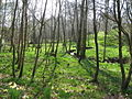 Spring time beside Hyde Gill - geograph.org.uk - 1239115.jpg