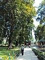 Srinagar - Shalimar Gardens 36.JPG