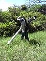 Starr-030626-0028-Cynodon dactylon-gas aspirator with Forest-Kahului-Maui (24635768385).jpg