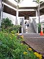 Starr-090730-3438-Lantana montevidensis-flowering habit with Kim-Honolulu Airport-Oahu (24970757705).jpg
