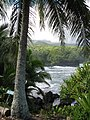 Starr-091104-0723-Cocos nucifera-habit view ocean-Kahanu Gardens NTBG Kaeleku Hana-Maui (24894011951).jpg