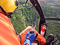 Starr-141014-2186-Caesalpinia decapetala-aerial view-Kakipi Gulch Haiku-Maui (25220922036).jpg
