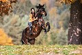 Steigendes Pferd (132669067).jpeg