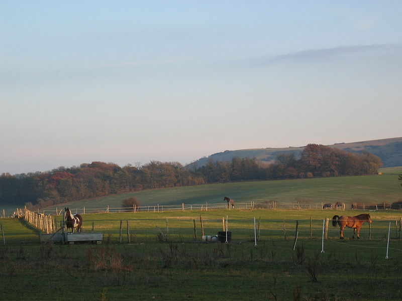ファイル:Stock Farm Near University of Sussex Campus.jpg