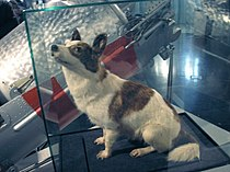 Strelka.Space dog.jpg