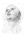 Study of the Head of a Youth Gazing Upward MET 75L 34r3m.jpg