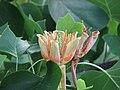 Summer in Botanic Garden - Cluj-Napoca (2564519563).jpg