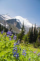 Summerland wildflowers with Mt. Rainier backdrop 04.jpg