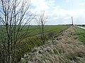 Sutterton Drove - geograph.org.uk - 723570.jpg