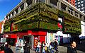 Sutton, Surrey, Greater London - Green Wall in the sun (2).jpg