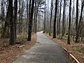 Suwanee Creek Greenway, March 2019 2.jpg