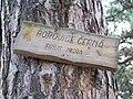 Tabulka Borovice černá - pinus nigra.jpg