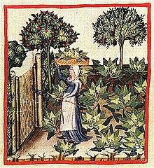 Středověká zahrada - Wikiwand