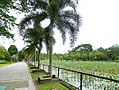 Taiping Lake Gardens - panoramio.jpg