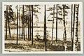 Takaharjun Ankkalampi, ADAM 1930s PK0279.jpg
