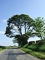 Tarn Lane - geograph.org.uk - 459280.jpg