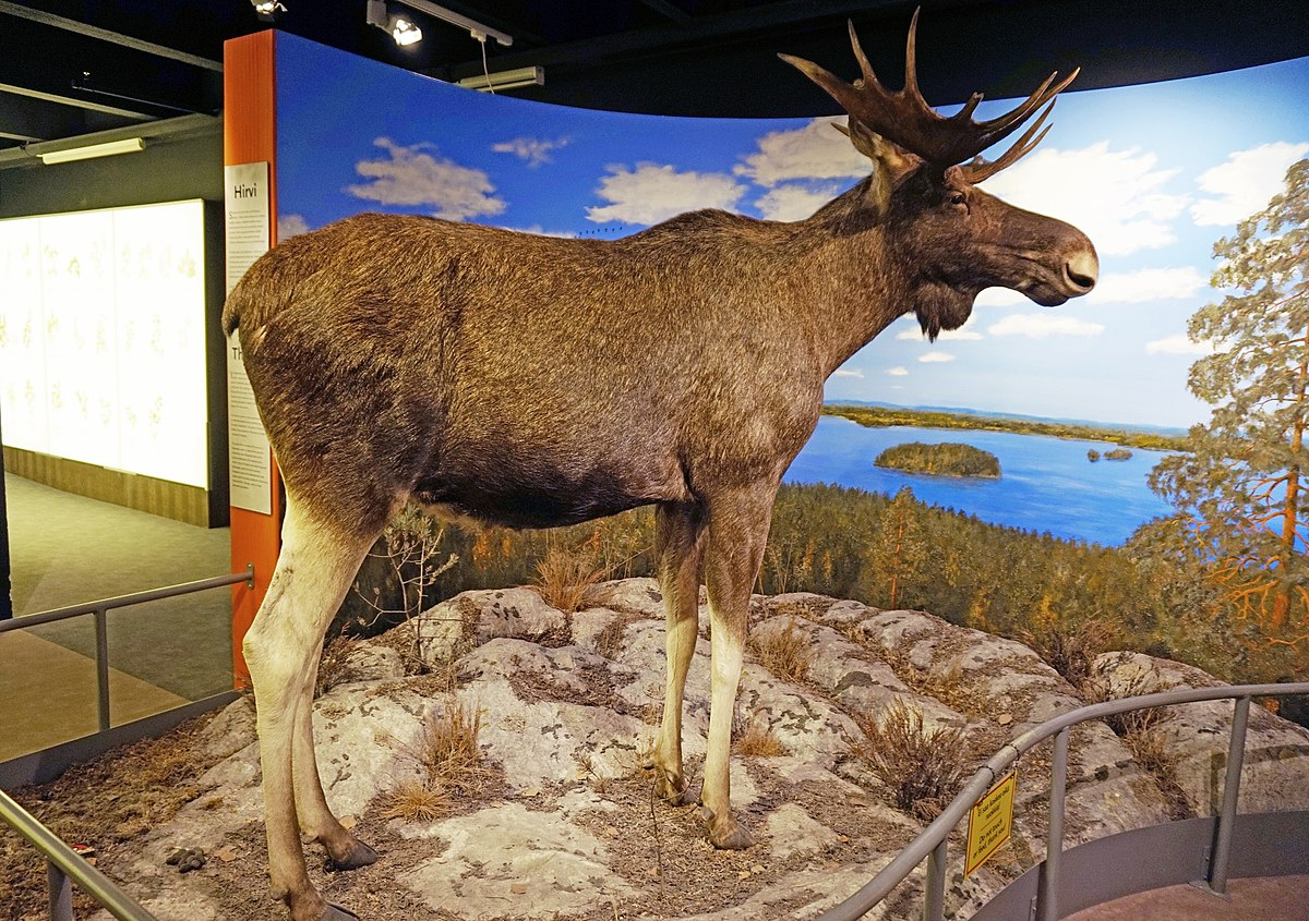 Natural History Museum Of Tampere