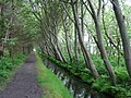 Texel - View SouthWest.jpg