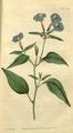 The Botanical Magazine, Plate 34 (Volume 1, 1787).png