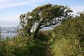 The Coast Path around Staddon Cliffs.jpg