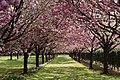 The Flower Association of Japan 2.jpg