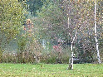 Westcott, Surrey - Image: The Lake, Westcott geograph.org.uk 589263