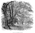 The New Forest its history and its scenery - page 109.png